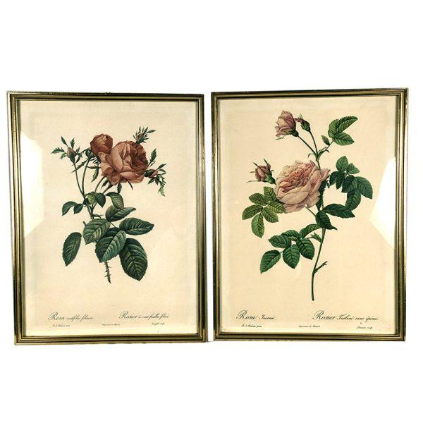 roses-illustration-redoute