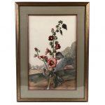 aquarelle-rose-tremiere