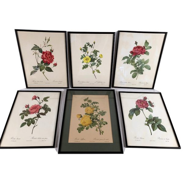 reproductions-roses-redoute